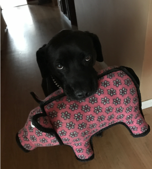 dog with pig